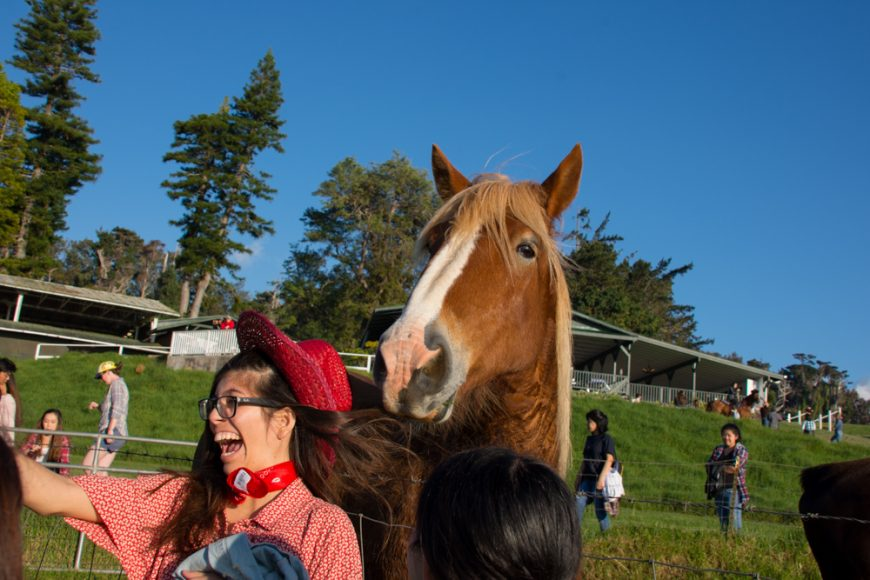 Kahua Ranch. Photograph by Ryan Su ('17)